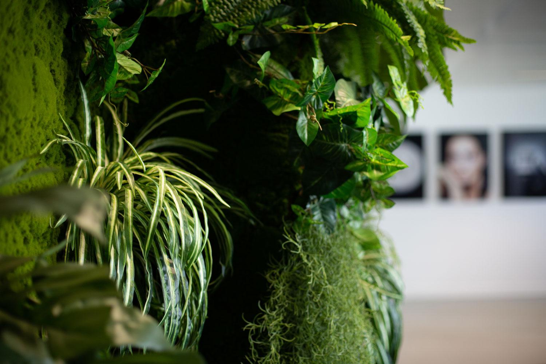 Photo de plantes d'intérieur